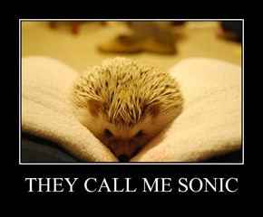 THEY CALL ME SONIC