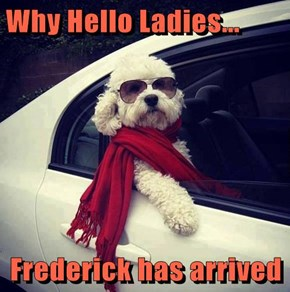 Why Hello Ladies...  Frederick has arrived