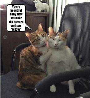 Say MEOW for Catnip Camera