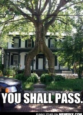 YOU SHALL PASS.