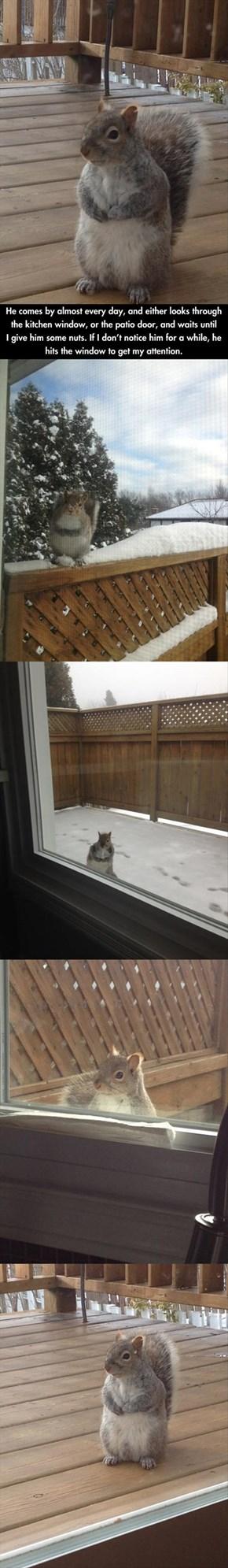 I Got a Pet Squirrel...Sorta...