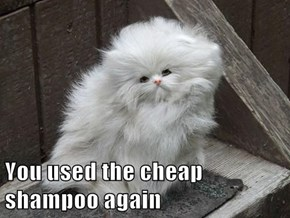 You used the cheap shampoo again