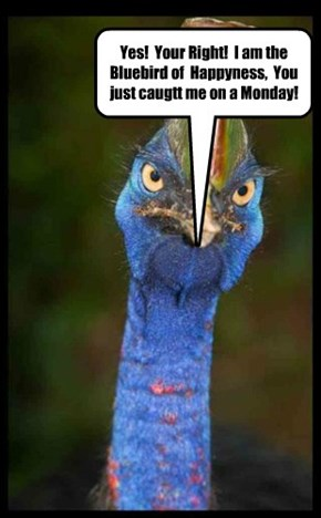 Yes!  Your Right!  I am the Bluebird of  Happyness,  You just caugtt me on a Monday!