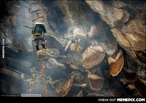 A nepalese Honey hunter collecting wild bee honey from a cliff side