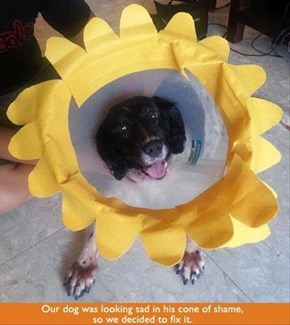 That's One Way to Brighten up the Cone of Shame