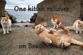 One kitteh rollover  on Beach Road!
