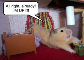 All right, already! I'M UP!!!!