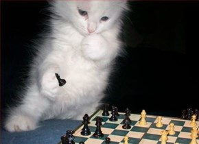 Chess master kitten contemplates capturing his opponent's piece en paw-sant