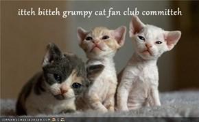 itteh bitteh grumpy cat fan club committeh