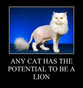 ANY CAT HAS THE POTENTIAL TO BE A LION