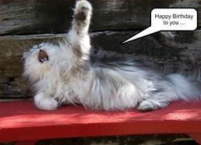 Opera Cat Sings ...