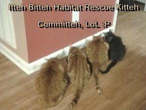 Itteh Bitteh Habitat Rescue Kitteh Committeh, LoL :P