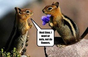 Next time, i want ur nuts, not da flowers.