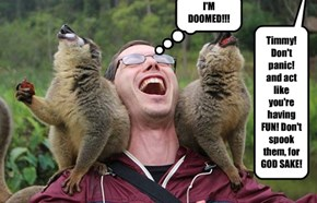 Timmy be told that he has 2 Tazmainian Devils on his shoulders!