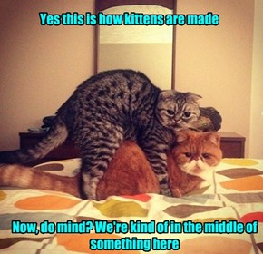 Yes this is how kittens are made