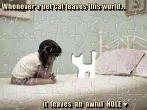Whenever a pet cat leaves this world...                 it  leaves  an  awful  HOLE ♥