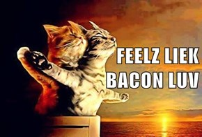 FEELZ LIEK                                   BACON LUV