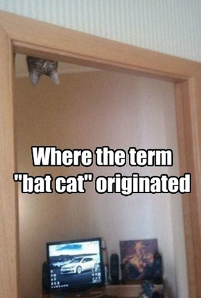 "Where the term ""bat cat"" originated"