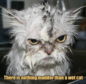 There is nothing madder than a wet cat