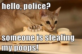 hello, police?   someone is stealing my poops!