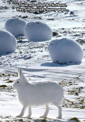 Arctic Puppy Bunnies?  Yes Please!