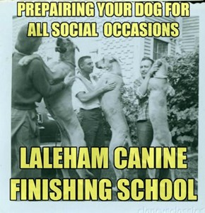 Laleham, Airedales & graces