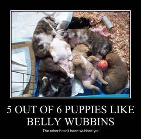 5 OUT OF 6 PUPPIES LIKE BELLY WUBBINS