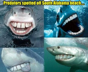 Predators spotted off South Alabama beach....