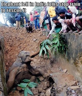 Elephant fell in India folks stop train to rescue it