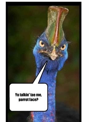 Yu talkin' tae me, parrot face?