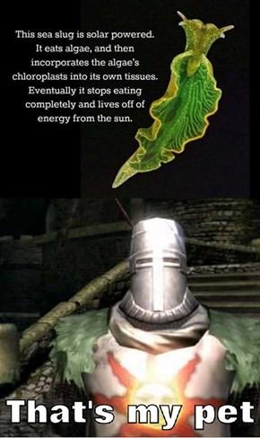 Praise the Slug!