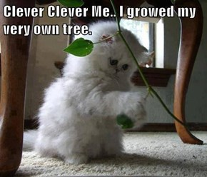 Clever Clever Me.. I growed my very own tree.