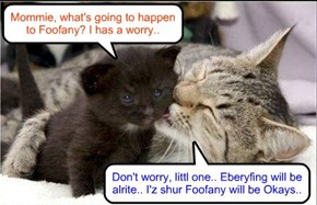 Everywhere across teh Globe, mother cats reassure dare babies about teh fate of Foofany at teh Sushi Olimpix..