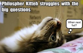 Philospher Kitteh struggles with the big questions