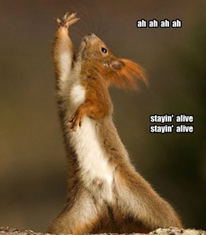 Squirrely Night Fever