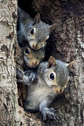 A Nutty Trifecta of Squee