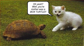 Oh yeah?  Well..you're mother was a BOX TURTLE!!