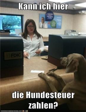 Kann ich hier  die Hundesteuer zahlen?