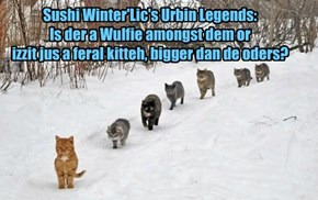 Sushi Winter'Lic's Urbin Legends:  Is der a Wulfie amongst dem or  izzit jus a feral kitteh, bigger dan de oders?