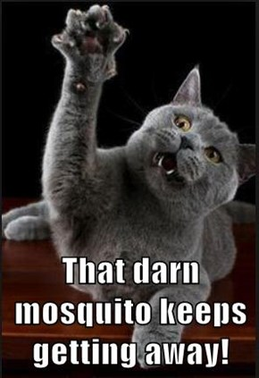 That darn mosquito keeps getting away!