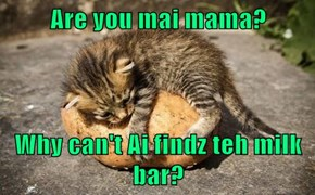 Are you mai mama?  Why can't Ai findz teh milk bar?