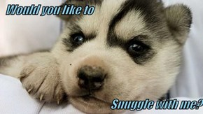 Would you like to  Snuggle with me?