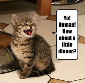 Yo! Human! How about a little dinner?