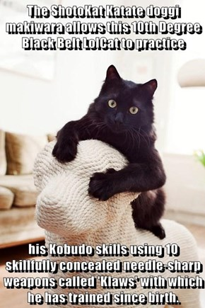 The ShotoKat Katate doggi makiwara allows this 10th Degree Black Belt LolCat to practice  his Kobudo skills using 10 skillfully concealed needle-sharp weapons called 'Klaws' with which he has trained since birth.