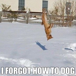 Snow Just Makes me Flip Out!