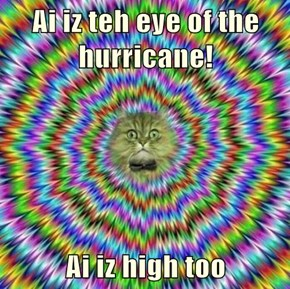 Ai iz teh eye of the hurricane!  Ai iz high too