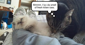 Mmmm. I luv da smell of fresh kitten toes.