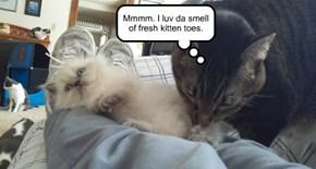 Mmmm. I luv da smell of fresh kitten toes.