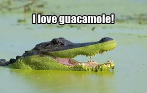 Want Some Chips With Your Gator Guac?