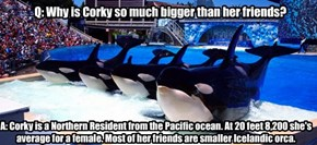 Q: Why is Corky so much bigger than her friends?